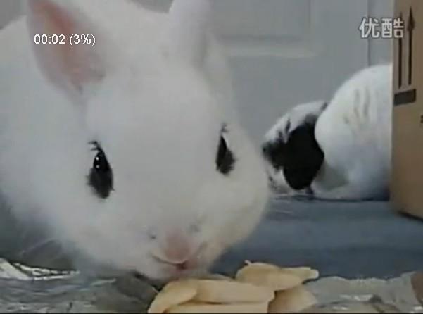 【嘿姆仔搞笑宠物视频】吃货歌 吃货们都要会唱哦!