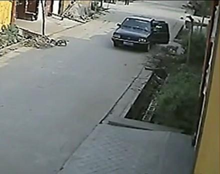 监控实拍开车贼偷狗
