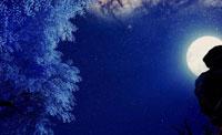 明教三生树