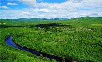 美丽大森林