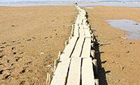 海边的独木桥