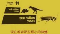 [中文字幕]地球上最完美的生物:蟑螂